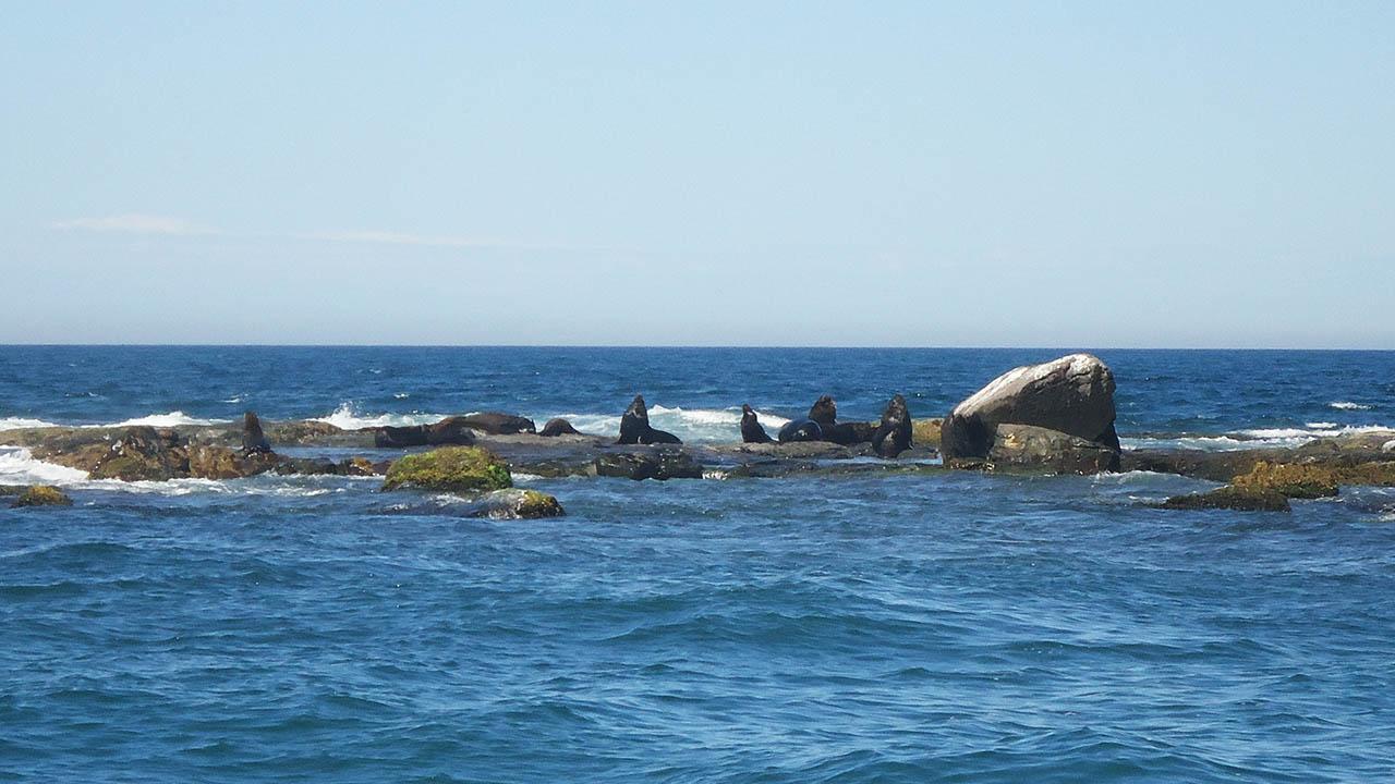 Ilha dos Lobos - Torres