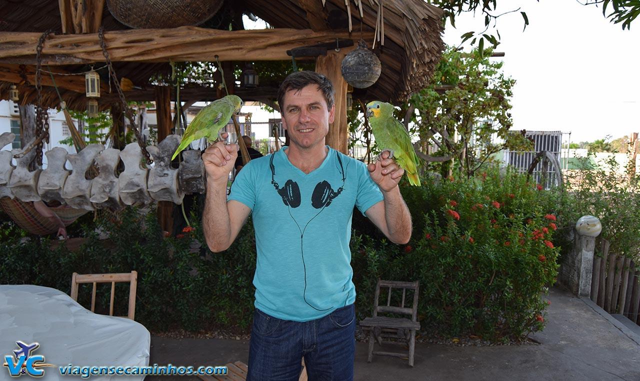 Papagaios da Pousada Solar das Gaivotas - Barreirinhas