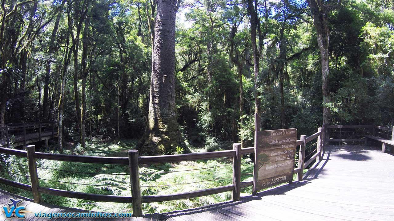 Mirante do Pinheiro Grosso