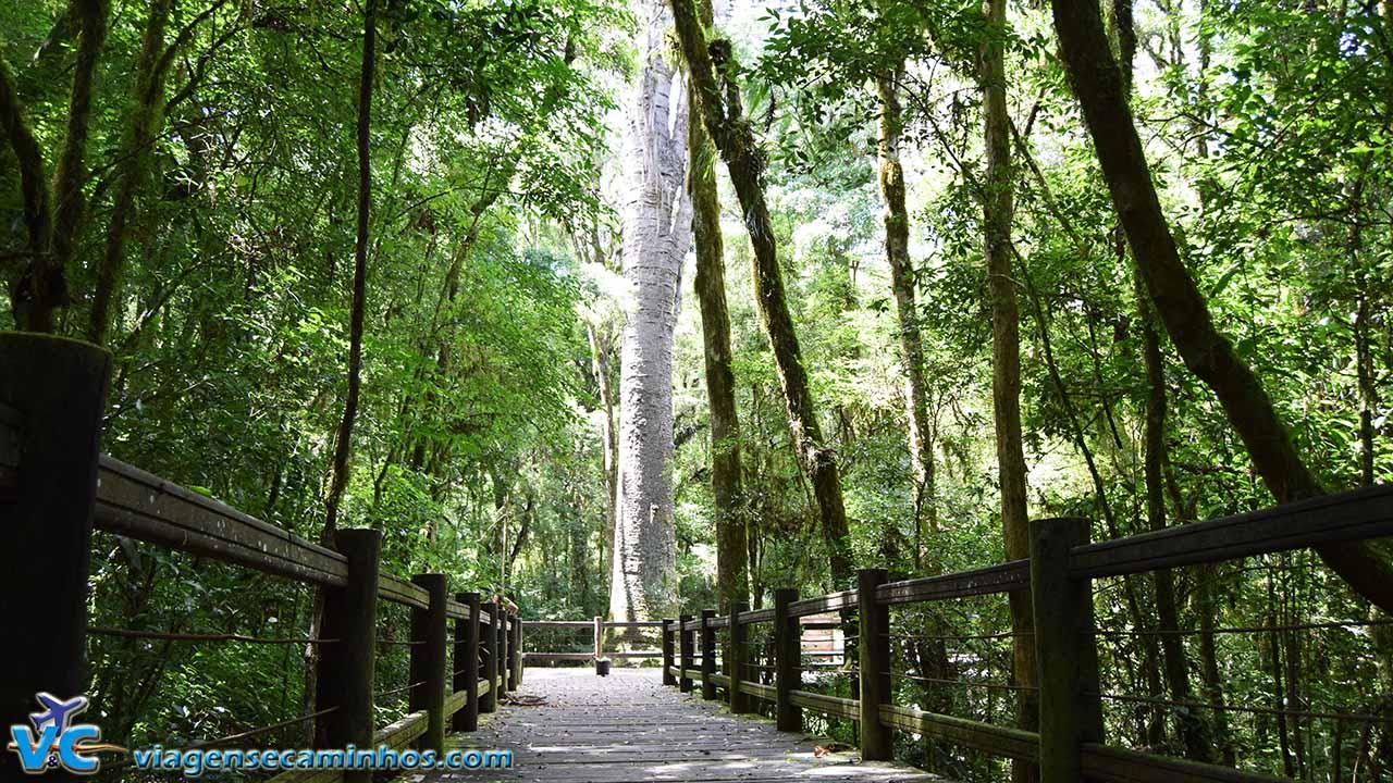 Parque do Pinheiro Grosso - Canela