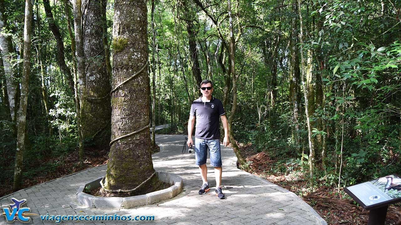 Trilha Parque da Serra - Canela